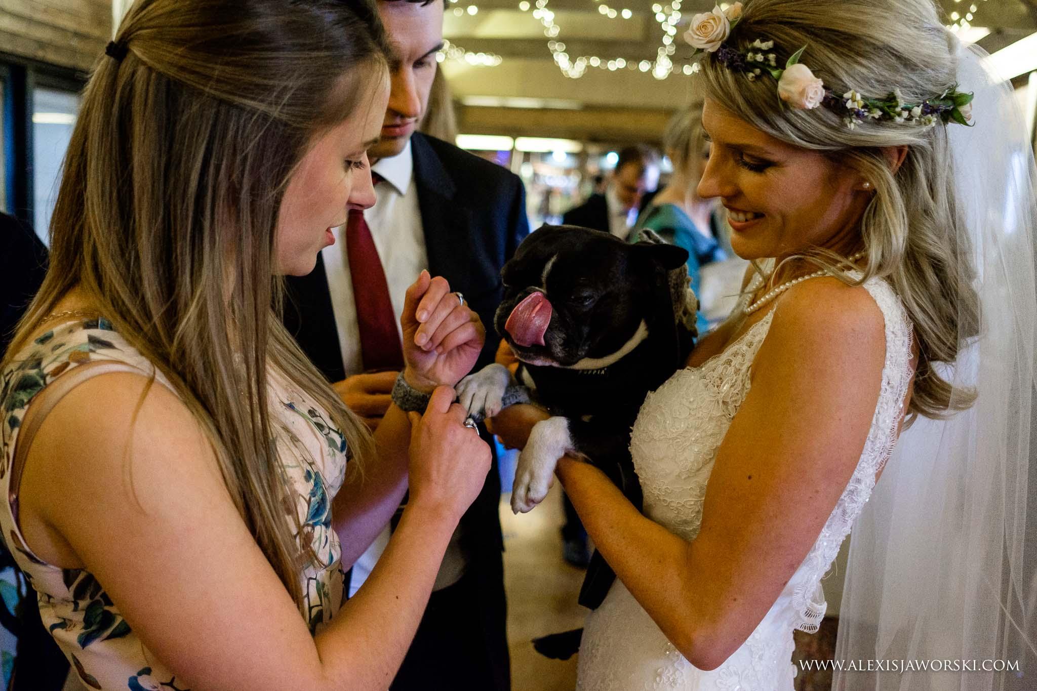 bride holding her dog