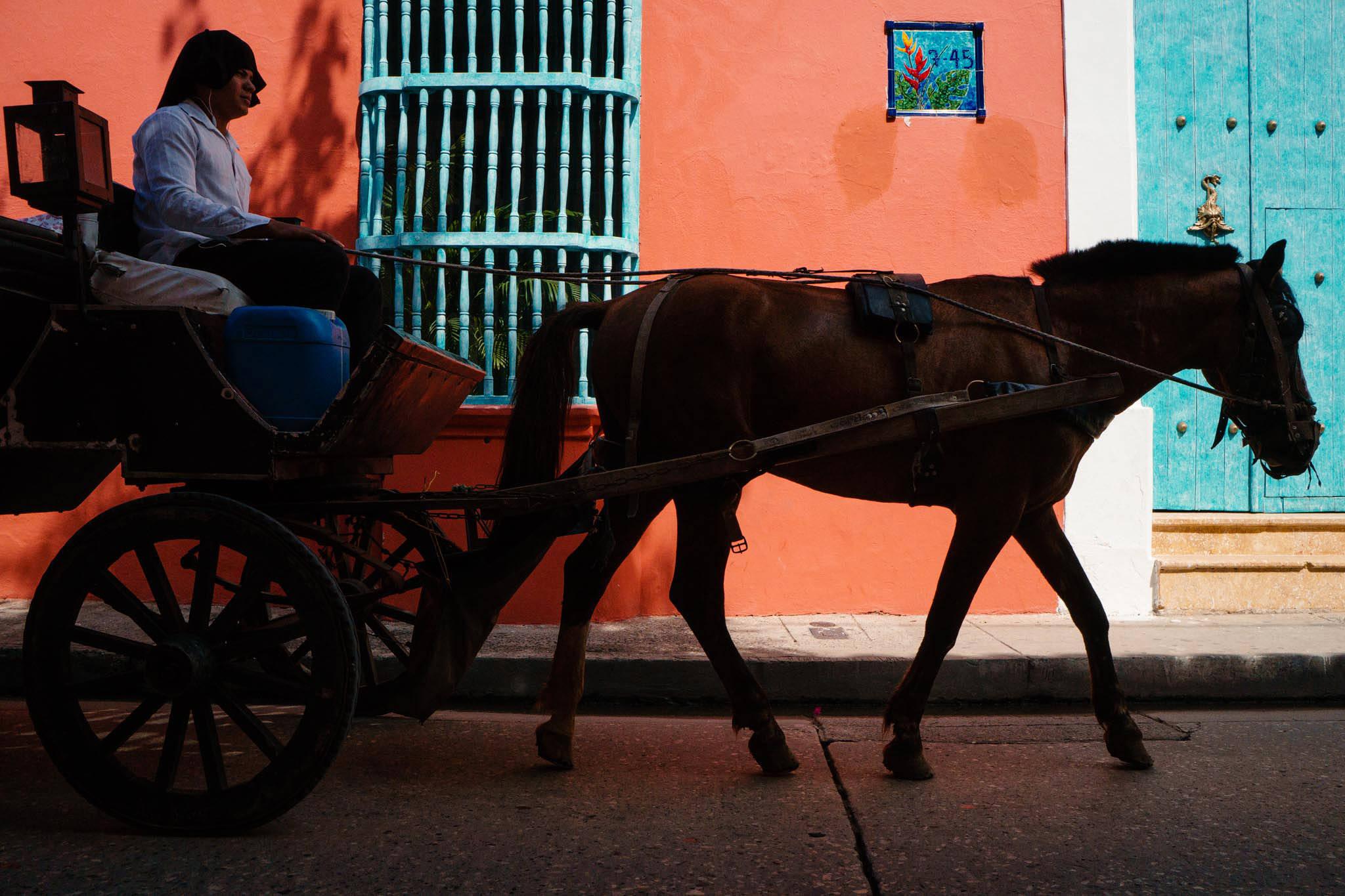 Cartagena horses