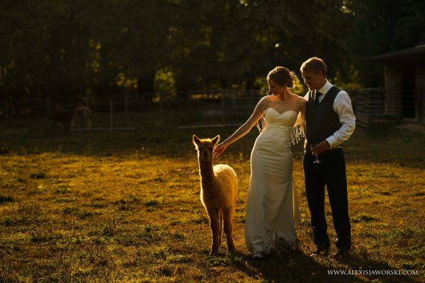 portraits with alpacas