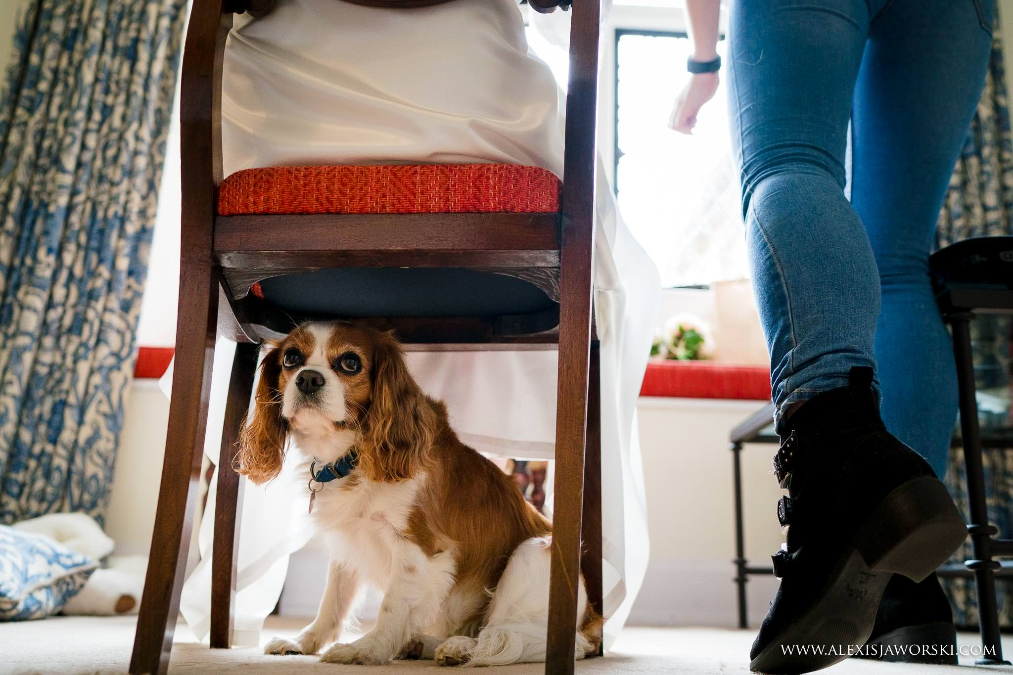dog under chair
