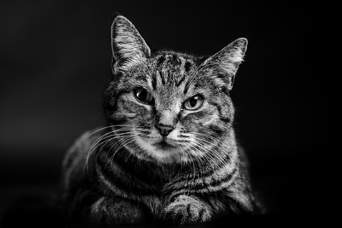 Portrait Photography Berkshire
