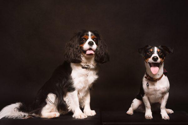 best buddies dogs
